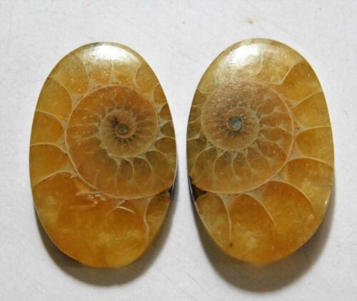 33.65 Cts Natural Ammonite (26.5mm X 17mm each) Loose Cabochon Match Pair