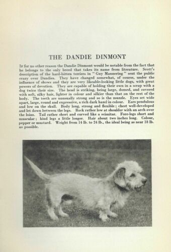 Dandie Dinmont - 1931 Vintage Dog Print - Breed Description - MATTED