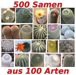 Kakteensamen, 500 Samen aus einer Mischung von über 100 (!!) Arten, Kaktus