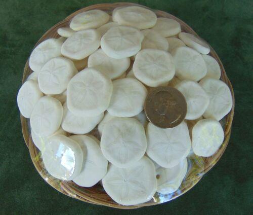 Basket of 100 pcs mini Sea Cookies Shells small biscuit lot Seashells in USA