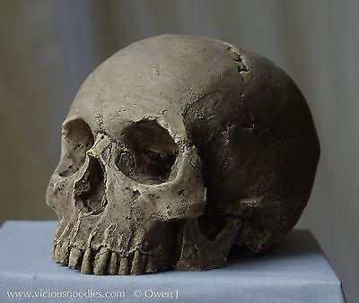 HUMAN SKULL REPLICA (natural) full size realistic, plaster of Paris