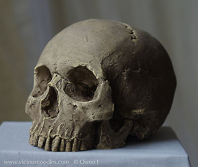 HUMAN SKULL REPLICA (sale price), full size, hand made from plaster of Paris