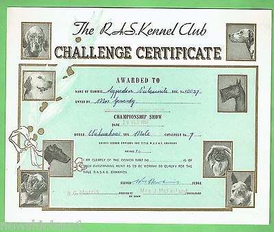 #T41. #20.  1957  RAS KENNEL CLUB DOG CHALLENGE CERTIFICATE, CHIHUAHUA