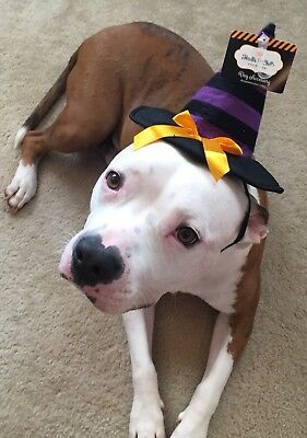NWT Trills And Chills Dog Cat Oet Which Hat Halloween Costume Accessory - Which Halloween Costume