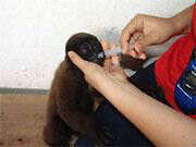 Support the operation and conservation efforts of the Azuay Zoo