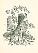 Wire Fox Terrier Book