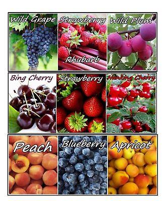 Organic Whole Fruit Preserves 9 Kinds Grape Cherry Peach Bluebrry Apricot - Peach Preserves