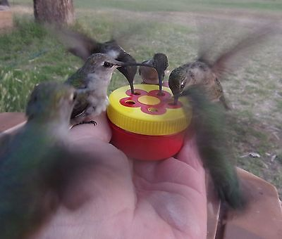 1 HAND HELD HUMMINGBIRD FEEDER- 5 PORTS FOR MORE FUN ! BY AMAZING BIRD STUFF !