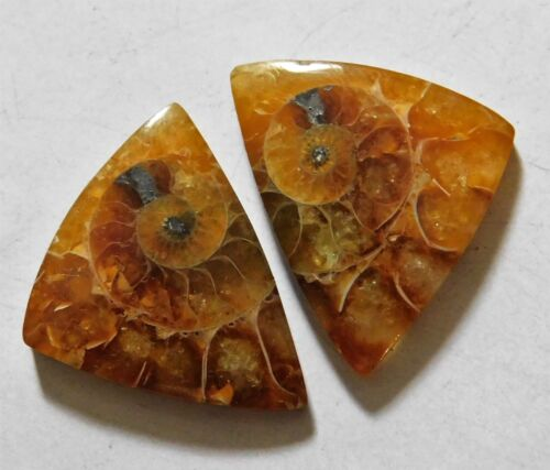 31.85 Cts Natural Ammonite (21mm X 16.5mm each) Loose Cabochon Match Pair