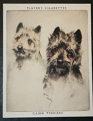 CAIRN TERRIER   Superb Unmounted  Vintage Twin Portrait Card # EXC