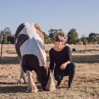Kokoro Horsemanship - Clinics and Private Lessons