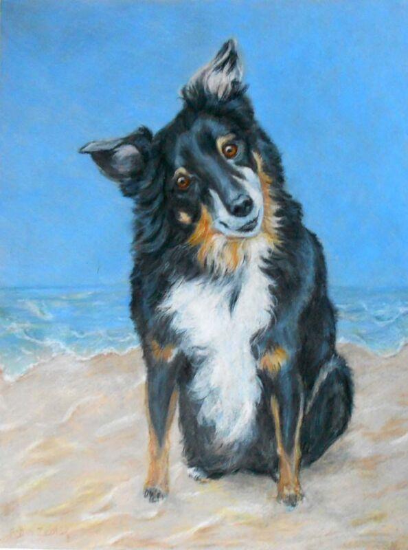 Australian Shepherd Dog Custom Pet Portrait by Artist Robin Zebley rzzart