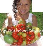 Angel Field Heirloom Tomatoes Seeds