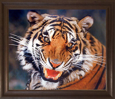 Wild Tiger Angry Face Wildlife Animal Wall Art Decor Brown Rust Framed Picture (Angry Face Painting)