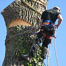 AFFORDABLE TREE REMOVAL-TRIMMING - TREE PRUNING - TREE CUTTING -