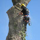 TREE SERVICE-LOW PRICES-FAST- SKILLED-CERTIFIED-INSURED
