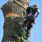 BUDGET TREE REMOVAL, TREE CARE SERVICES-Save $$ with MAPLECREST