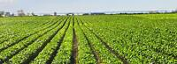 Looking for Agriculture/Crop Land to Lease