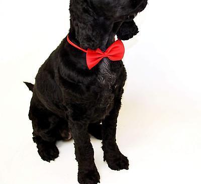 Halsbinde für Haustiere - Verstellbares Halsband - Katze - Kostüme Für Haustiere