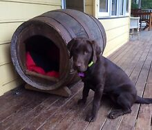 WINE BARREL DOG KENNEL The Patch Yarra Ranges Preview