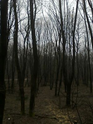 33 010 square metres of woodland for sale in Bulgaria near Romania and Serbia