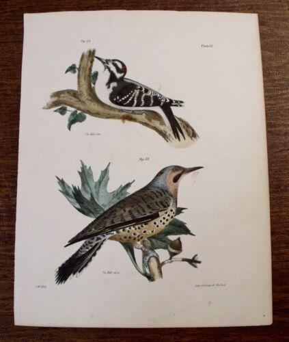 Antique 1844 J. W. Hill BIRD PRINT Hairy Woodpecker, Golden Winged Woodpecker
