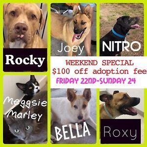 $100 off adoption fees!