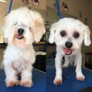 Mobile Dog Grooming in Durham