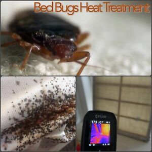 Bed bugs heat treatment