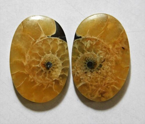34.60 Cts Natural Ammonite (26mm X 17.5mm each) Loose Cabochon Match Pair