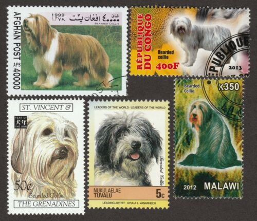 BEARDED COLLIE ** Int