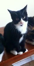 Kittens need a home!! Rooty Hill Blacktown Area Preview