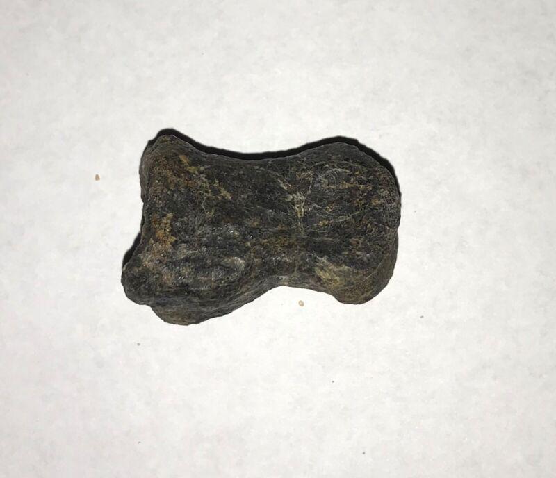 Camptosaurus 37mm toe bone Morrison Formation Big Horn Basin Wyoming