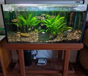 Glass aquarium package with fish, plants, filter, pump, light Ardeer Brimbank Area Preview
