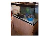 Fluval fish aquarium 3ft 200L with cabinet, heater, bulbs, bog wood