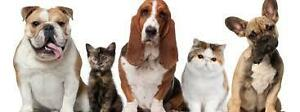 Pet Care/House Sitting-Very Reasonable Rates