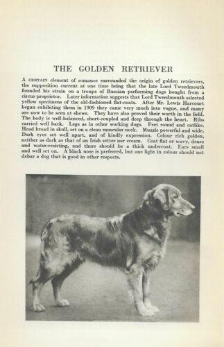 Golden Retriever - 1931 Vintage Dog Print - Breed Description - MATTED