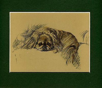 Lucy Dawson ~ Pekingese ~ (Mac) Colour Print Genuine Vintage 1937