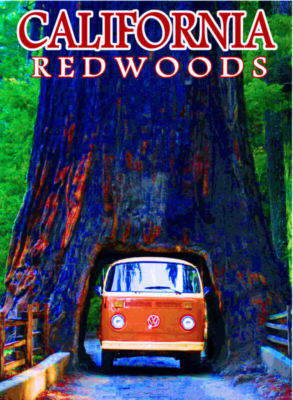 California Redwoods National Park United States Travel Advertisement Art Poster