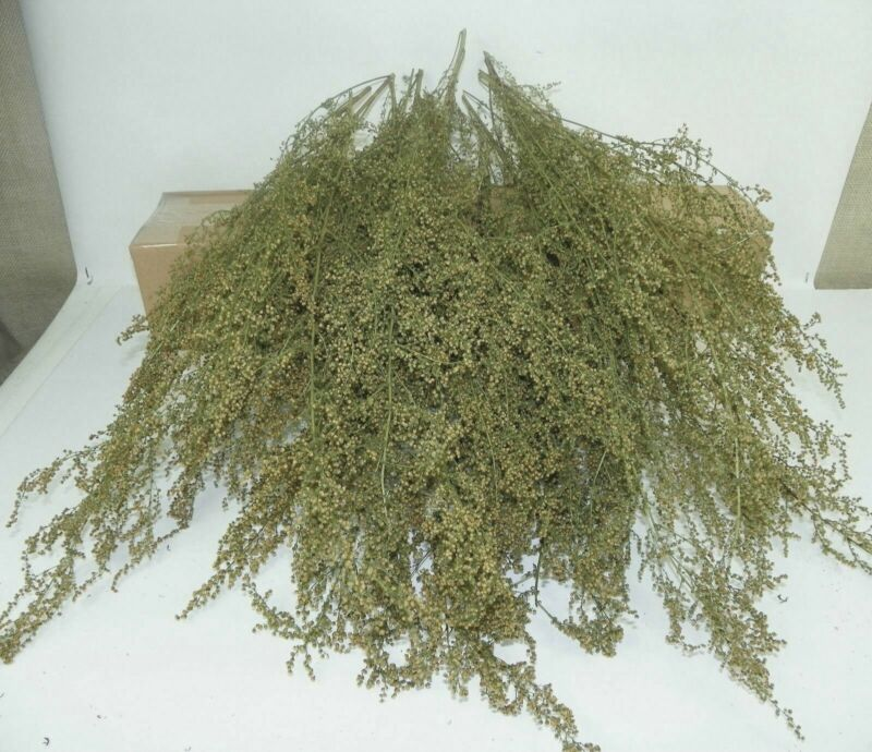 """All Natural Dried Heirloom Sweet Annie Aromatic Floral Supply 15""""-18"""""""
