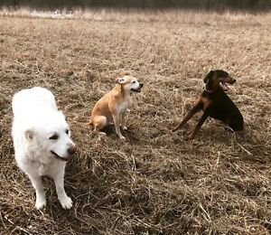Walks with Jess-Pet Services