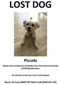 Lost Dog - Maltese x Shih Tzu - Point Cook3030 Point Cook Wyndham Area Preview