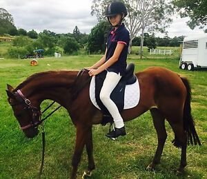 Register riding pony mare Eltham Lismore Area Preview