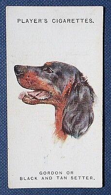 Gordon Setter   Original 1920's Dogs Head Portrait Card