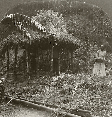 Keystone Stereoview Building a Thatched Hut in Jamaica Rare Primitive Homes # (Building A Hut)