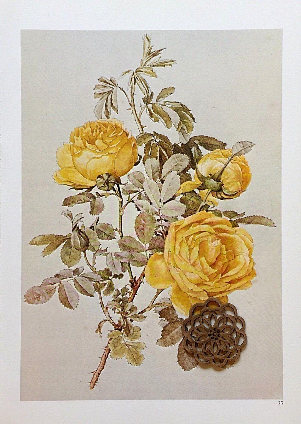 art print~PEONIES~Paul deLongpre Victorian Flowers Floral vintage repro 20x15