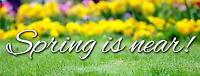 Lawn Care Services for Residential & Commercial Fully Insured