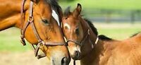 Horse Boarding, outdoor with trails - limited availability