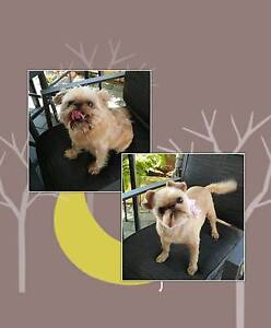 Top2Tail Dog Grooming    $55 High Wycombe Kalamunda Area Preview