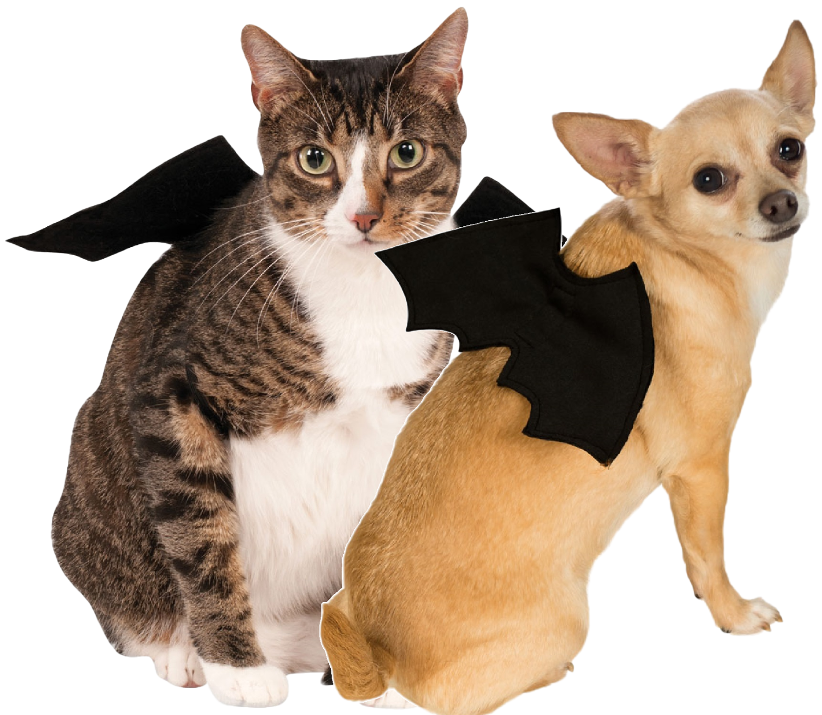 Animal Pet Dog Cat Bat Vampire Halloween Fancy Dress Costume Outfit Wings 2